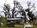 Tin roofing hangs from the oak trees surrounding Gary and Verna Doan's home in the Mulberry Canyon area south of Merkel Friday March 20, 2020. The Doan's property was damaged by Thursday's tornado.